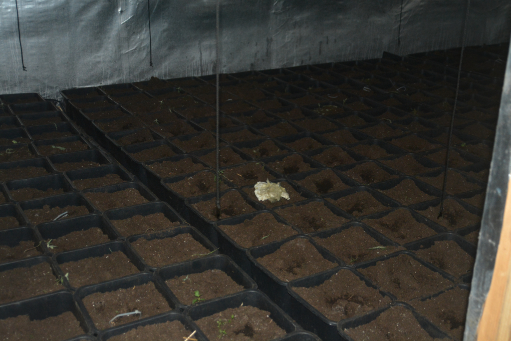 Rezultat slika za Uhapšen zbog droge i krađe struje: Pronađena laboratorija za uzgoj skanka
