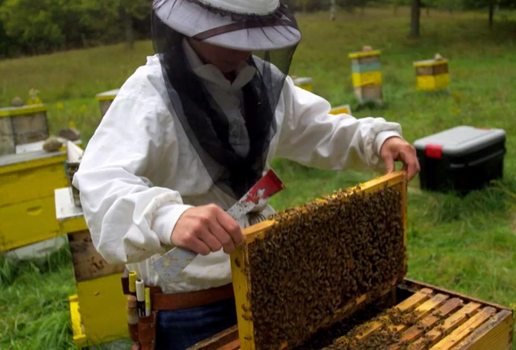 položaj crne pčele