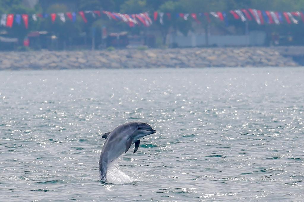 (FOTO) Istanbul: Performans delfina u gradu na Bosforu